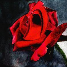 'abstract rose watercolor' by Marko Ivancevic Watercolor Rose, Watercolor Paintings, Abstract, Shirt, Pink Watercolor, Summary, Water Colors, Dress Shirt, Shirts