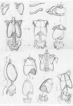 anatomi-model-karakalem-çizimleri-qwe5