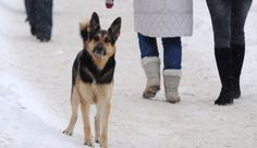 Loyal dog waits at river port for 3 weeks hoping for his guardian's return » DogHeirs | Where Dogs Are Family « Keywords: loyal dog, Amur River, Russia, Khabarovsk