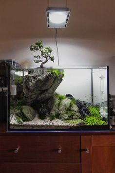Summary: Betta Fish also known as Siamese fighting fish; Mekong basin in Southeast Asia is the home of Betta Fish and is considered to be one of the best aquarium fishes. Planted Aquarium, Aquarium Aquascape, Aquarium Terrarium, Aquarium Landscape, Betta Aquarium, Home Aquarium, Nature Aquarium, Betta Fish, Aquascaping