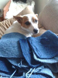 Dotty is really getting into this picnic rug knitting malarky. Lleyni Mini Wool Pots. Lleyni Mini dog