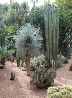 Cactuses at Jardin Majorelle Marrakech - www.thefreshlight.com