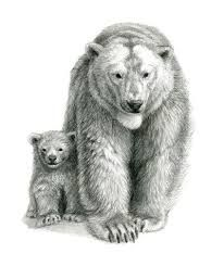 Resultado de imagem para bear POLAR drawing