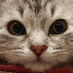 I iz watching you...