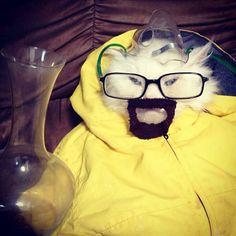 Heisenberg cat