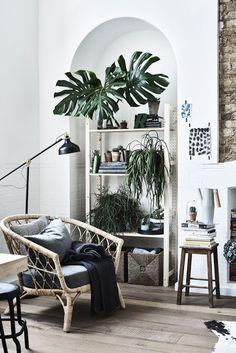 Salones donde las protagonistas son las plantas #plantas #salones #decoración #hogar #vergel #verde