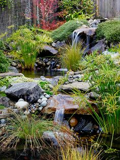 The sound of moving water from waterfalls adds to the soothing nature of Japanese gardens. This stream is punctuated by two waterfalls and ponds. Papyrus, ornamental grasses, and groundcovers bring life to the stream edge.