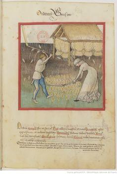 IBN BUTLÂN , Tacuinum sanitatis 15. Jhd Latin 9333  Folio 42r
