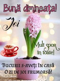 Good Morning, Plants, Motivation, Google, Buen Dia, Bonjour, Plant, Good Morning Wishes, Planets