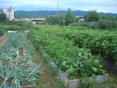 narrow vegetable lines Backyard Vegetable Gardens, Hobby Farms, Water Systems, Growing Vegetables, Belize, Amazing Gardens, Garden Design, Plants, Outdoor