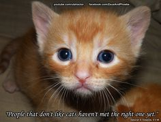 Watch videos of kittens at https://www.youtube.com/playlist?list=PL35306587D74B164B