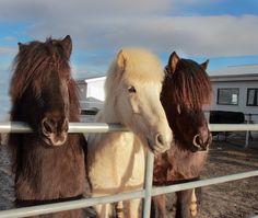 My horses by Anna Guðmundsdóttir on 500px