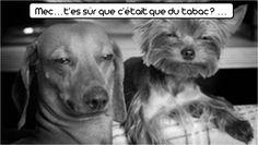 #funny #pets #humor #photos #zoomalia #animalerie