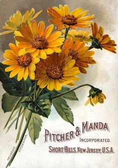 Vintage Seed Packets and Crate Labels - Pritcher Manda Seeds Art Vintage, Vintage Ephemera, Vintage Cards, Vintage Postcards, Vintage Images, Vintage Prints, Vintage Pictures, Vintage Labels, Vintage Yellow