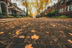 Fallen Leaves, Autumn Leaves, Take The Opportunity, Pittsburgh, Bucket, Mood, Twitter, Colors, Building
