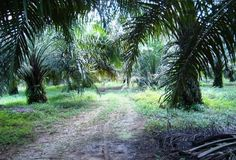 palmöl produkte erkennen liste kosmetik