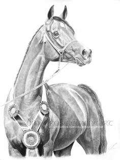 Graphite pencils, this original A3 drawing is still at home with me! If you are interested in purchasing it, or commissioning your very own custom piece, please contact abigail.rose06@gmail.com or visit www.facebook.com/abigailrose.equineart
