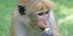 "Top 5 Stupidest Thoughts Ever - LOL ""Statistic: Dead monkeys tend to fall out of trees more often than live monkeys..."" Cont..."
