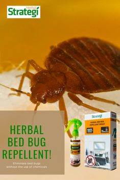 Herbal Strategi Bed Bug Spray: Get rid of bed bugs (Khatmal Marne Ki Dawa) without the use of chemicals. A bedbug-infested house is one of the most common. Bed Bug Control, Pest Control, Household Cleaning Tips, Cleaning Hacks, Bed Bug Spray, Cedrus Deodara, Rid Of Bed Bugs, Bed Bugs Treatment, Bed Bug Bites