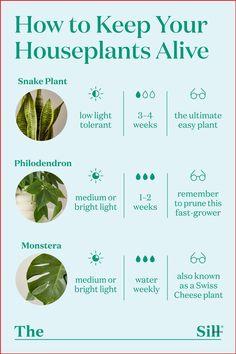 Diy Garden, Indoor Garden, Garden Plants, Potted Plants, Best Indoor Plants, Garden Ideas, Easy Care Houseplants, Inside Plants, Inside Garden