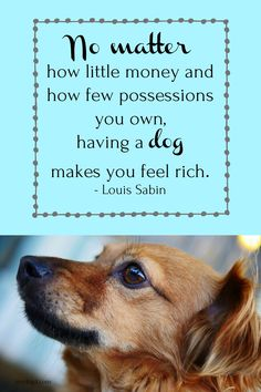 Dog Quotes, Dog Love, Puppy