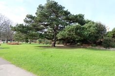 Beautiful tree in Poole Park with a crane peeping out on the right hand side.
