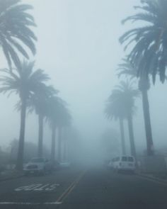 Its not all sunshine & palm trees in Newport. Sometimes its fog & palm trees.