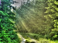 #forest #sunshine #hdr #summer #sweden