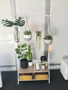 House Plants, New Homes, Projects, Balcony, Log Projects, Indoor House Plants, Houseplants