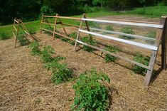 Recycled Pallets Used for Tomato Trellis. Recycled Pallets used for tomato trellis. Tomato Trellis, Diy Trellis, Tomato Cages, Trellis Design, Tomato Garden, Garden Trellis, Potager Garden, Tips For Growing Tomatoes, Growing Tomato Plants