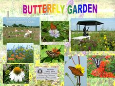 Butterfly Gardens using native plants can be found all around Florida