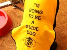 Follow my lead! Taking a lesson from the amazing guide dogs! - Lawrence Hilton