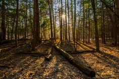 """Another beautiful spring photo taken in our Cuyahoga Valley National Park 