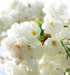 白|takara flower life-フラワーライフ-
