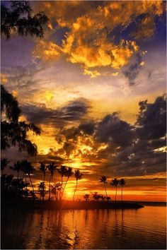our-amazing-world:Silver Palm Sunset, Amazing World beautiful amazing