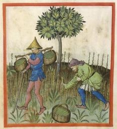 Man with baskets balanced on branch holding green sticks; another man picking green plants. Asparagus? Medieval applied botany