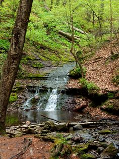 Parfrey's Glen, Devils Lake State Park  Baraboo, WI. Making your way to this waterfall is very interesting. I gave up trying to cross the creek without falling or getting my feet wet. It's a much better experience if you don't mind wet feet. ~AP