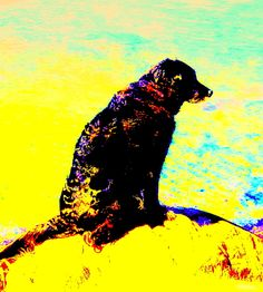 Have You Heard Of The Patient Old Dog On The Lonely Planet by Hilde Widerberg Old Dogs, Lonely Planet, Planets, Art Pieces, How Are You Feeling, Wall Art, Pictures, Painting, Image
