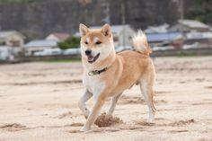 やま馬っぽい All Types Of Dogs, Husky, Animals, Animales, Animaux, Animal, Animais, Husky Dog