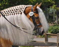 Braiding on this horse is beautiful.