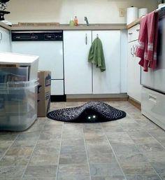 10 fotos que demuestran el lado siniestro de los gatos