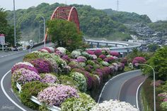 Flower Road & Bridge by Toshimo1123 on Flickr.
