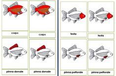 Risultati immagini per Nomenclature Montessori 3-6 anni  pesce
