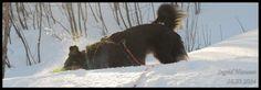 The importance of snowbading! Dogs, Animals, Art, Art Background, Animales, Animaux, Doggies, Kunst, Animal