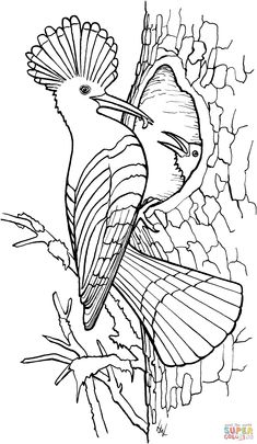 free printable birdhouse coloring pages bird coloring pages realistic realistic coloring pages birdhouse free printable coloring pages Tangled Coloring Pages, Emoji Coloring Pages, Disney Princess Coloring Pages, Coloring Pages To Print, Coloring Book Pages, Bird Drawings, Drawing Sketches, Free Online Coloring, Bird Art