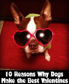 10 Reasons Dogs Make The Best Valentines