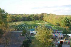 Harmony Hill Wines - Bethel, Ohio : Ohio Wine Trail : Ohio River Valley : Award-winning wines from our vineyard