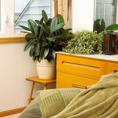 Personalize your bedroom with the beauty of easy-care houseplants.
