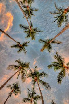 Under them palm trees >