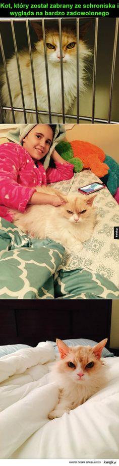przygarnięty koteł
